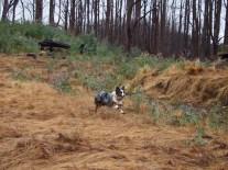 A speedy running Lumen (bonus stick included)