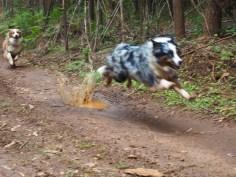 PUDDLE SPLASH FLYING DOG!!!