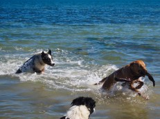 I found that so many of the photos of dogs in water not only featured dogs leaping majestically out of the water like unicorns, but also the less majestic back of Badger's head.