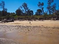 Loner whippet. Standing on the beach like a loner.