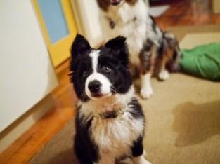 Look at dem ears.
