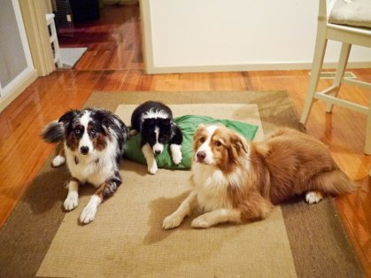 This is like the worst family photo ever. Mal looks so stressed, Loki's doing something weird, and Lu looks bored. Nice work, dog family!