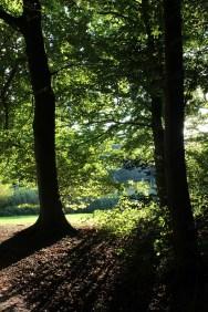 Beautiful autumn light streaming through the trees