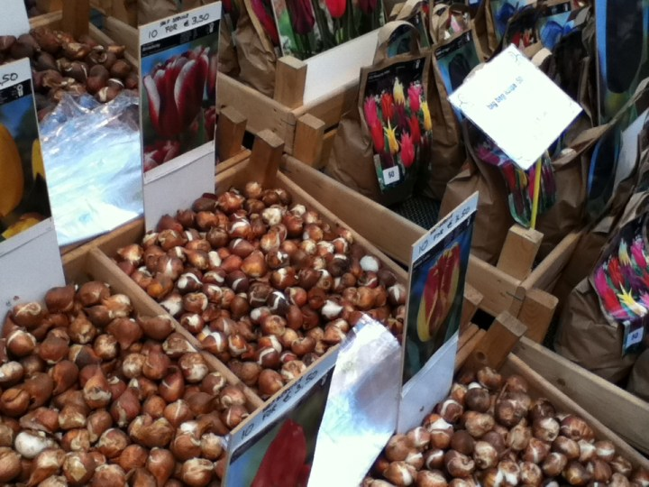 buy-the-right-tulips