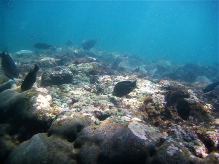 Life of Shal_Essential snorkeling tips for Bali_2