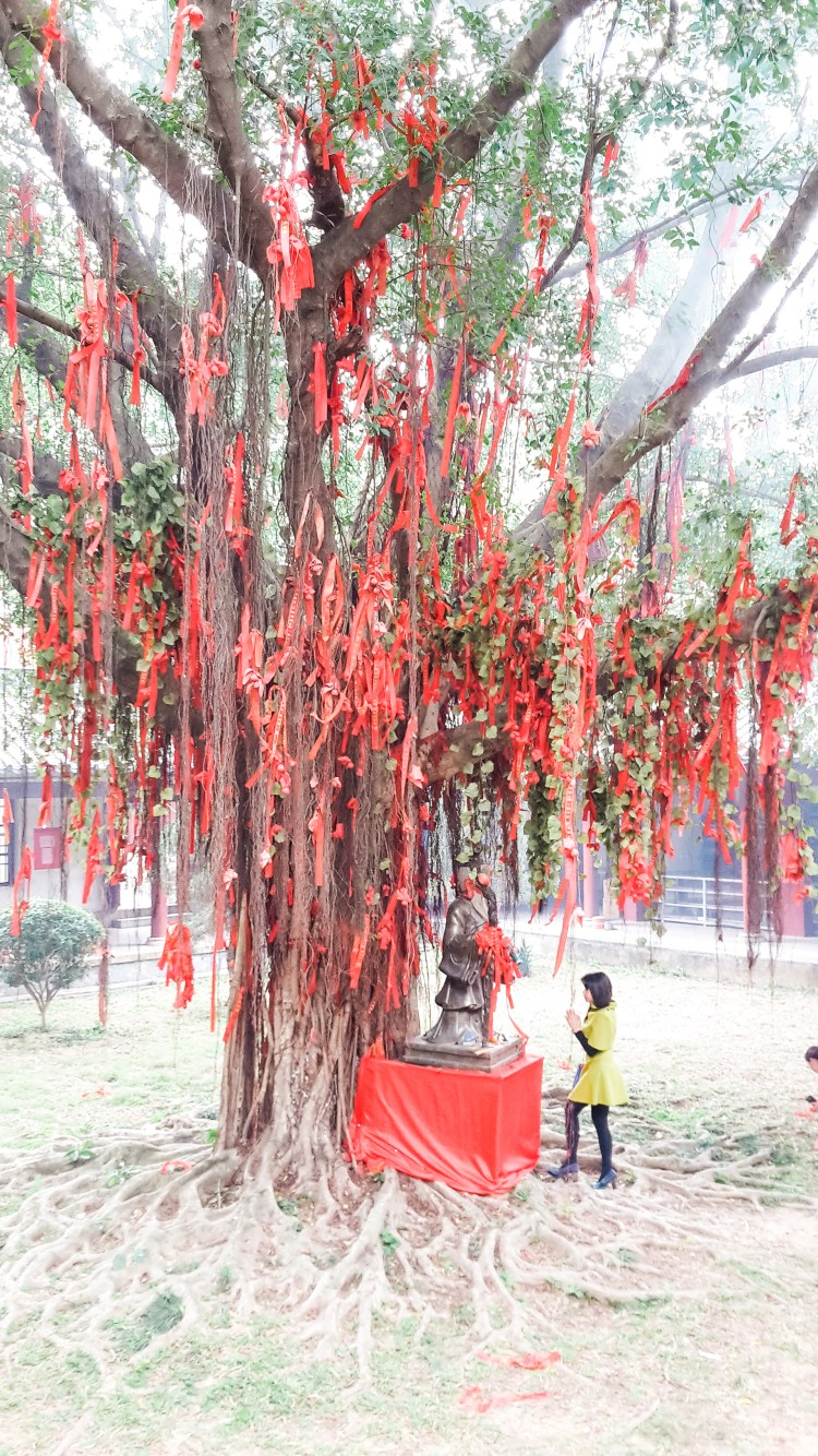 Life of Shal, Red Ribbons On A Tree