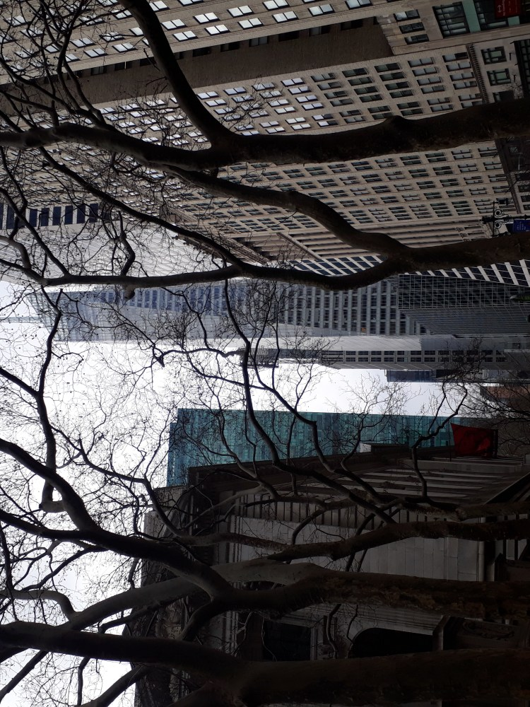 Trees lining streets of New York