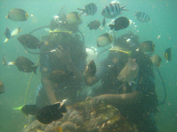 Bali, under sea diving
