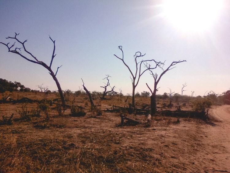 Chobe National Park, Dryness, Park, Trees