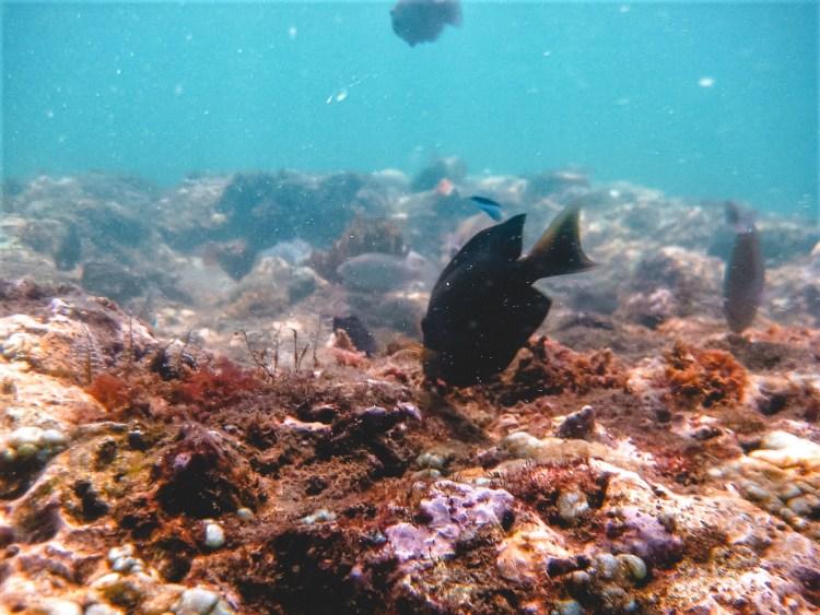 Bali, Undersea diving, fish