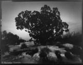 Arches - Utah Juniper - 4x5 90mm