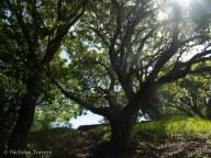 full spring/summer in the California trees