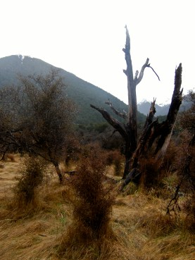 The Doubtful Valley, matted grass and stunted trees with haunting scrags here abundant