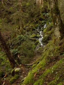 so many wonderful streams across the Path!