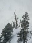 Alta snag off the grand traverse