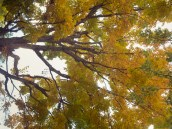 branches and colored leaves overhead