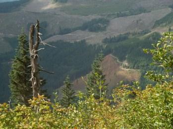 barren red browns of logging