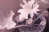 Close to Leaf