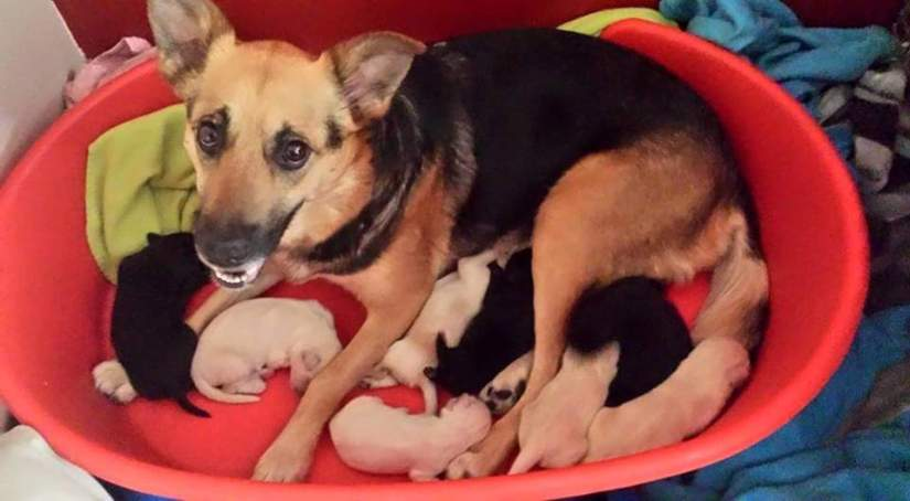 Dog with all her Puppies