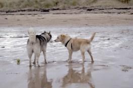 Ted at Gullen Beach04