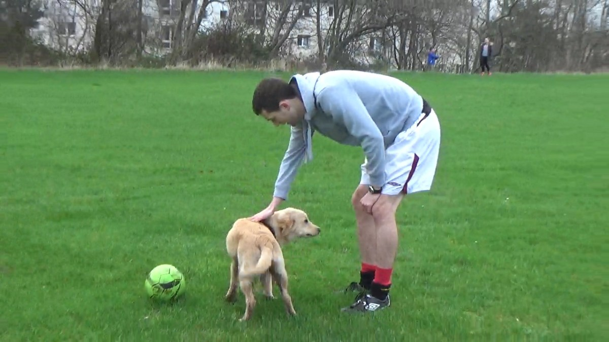 Dogs and Puppy's love football
