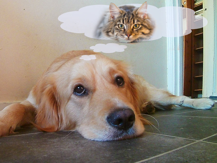 Do dogs dream of cats