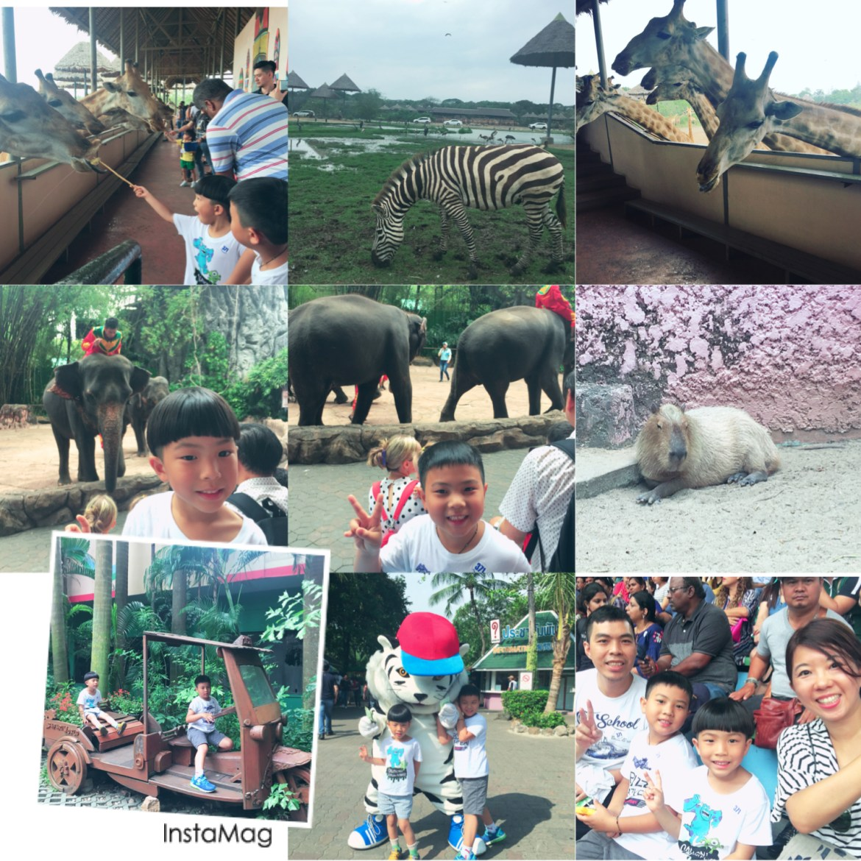 【曼谷華欣】2018親子自由 Safari World野生動物園 聖托里尼樂園 恰圖恰假日市集 火車市集