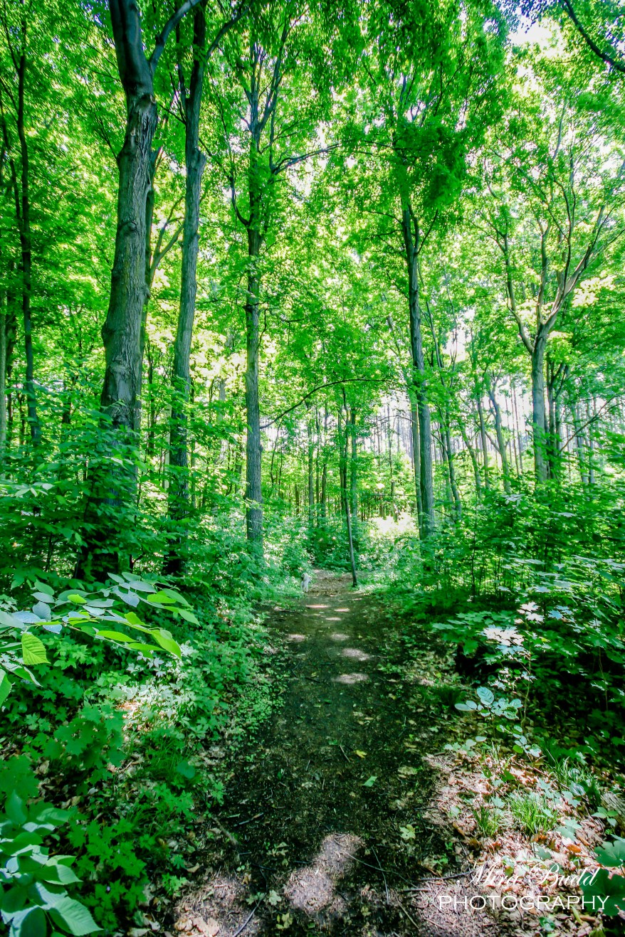 Things to See in Caledon, Hiking Trails in Ontario, Hiking, Beautiful Places in Ontario,