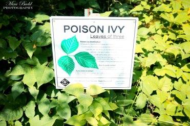 Poison Ivy, Borer's Falls Conservation Area