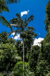 Mount Tamborine, Gold Coast Australia, Tamborine Rainforest Skywalk,