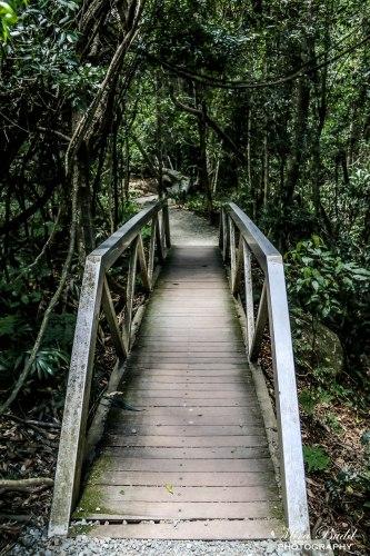 Mount Tamborine, Gold Coast Australia, Tamborine Rainforest Skywalk, Hiking Trails Queensland, Hiking Trails Australia, Places to visit in Surfers Paradise, Beautiful Places in Queensland,