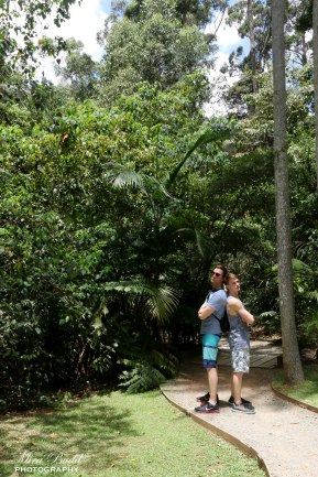Mount Tamborine, Gold Coast Australia, Tamborine Rainforest Skywalk, Hiking Trails Queensland, Hiking Trails Australia, Places to visit in Surfers Paradise, Beautiful Places in Queensland,
