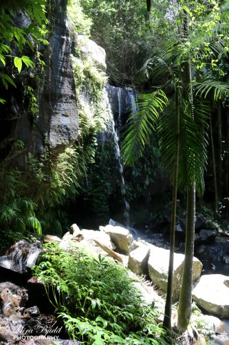 Waterfalls Queensland, Gold Coast Waterfalls, Hiking Trails Queensland, Hiking Trails Australia, Places to visit in Surfers Paradise, Beautiful Places in Queensland, Mount Tamborine, Gold Coast Australia, Curtis Falls Mount Tamborine,