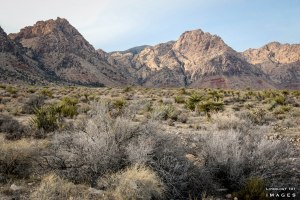 Hiking Vegas, Things to Do in Vegas, Things to see in Vegas, Places to Visit in Vegas, Vegas Attraction,