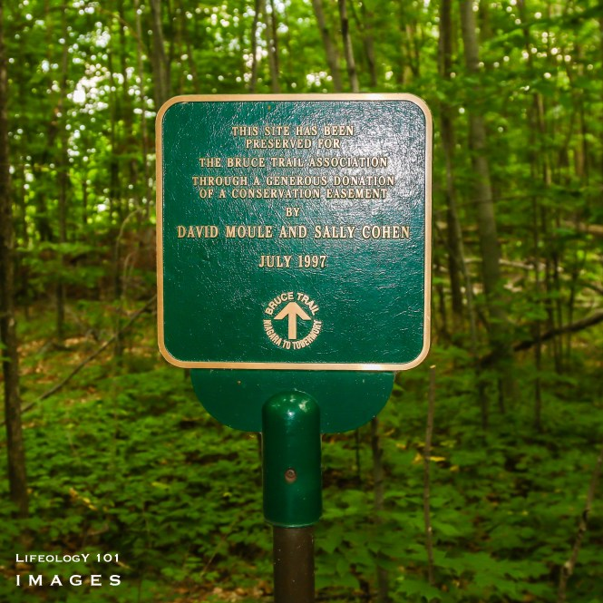 Bruce trail Hiking, Hiking Ontario, Ladies Hiking Group, Beautiful Trails in Ontario, Things to do in Ontario,
