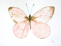 butterfly watercolor