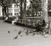 pigeon man