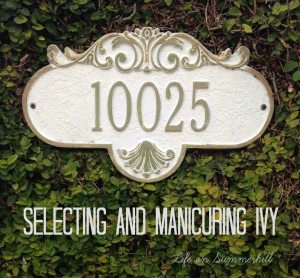 Blog Ivy