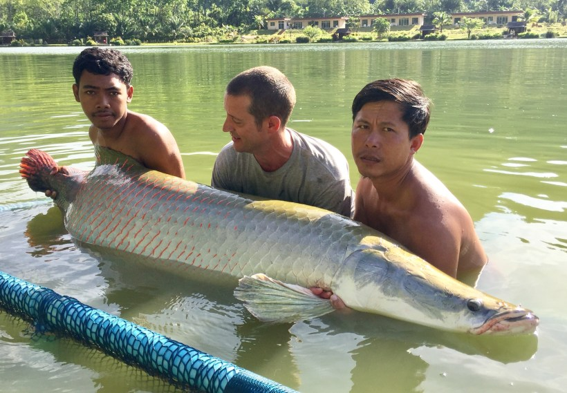 Arapaima Thailand