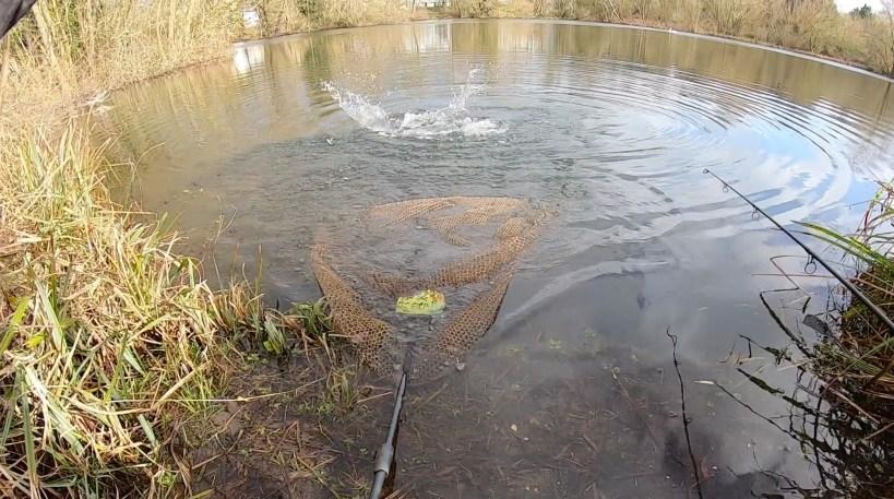 pike in the net