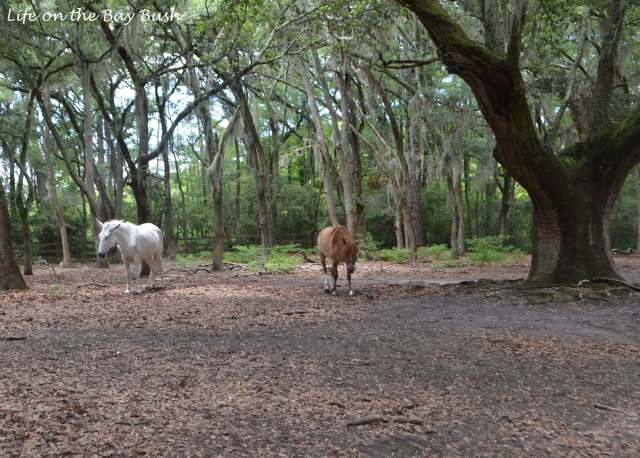horses at brookgreen gardens