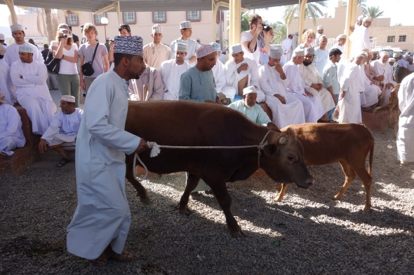Live animal market in Nizwa, Oman