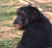 Monkey_CH