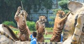 Our-Work-Landing-Page-Zoos-and-Safari-Parks-Thumbnail