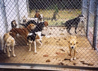 keeping_kennels_clean_and_monitoring_the_health_of_animals_becomes_impossible_when_