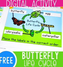 Life Cycle of a Butterfly Activity for Kids - [ 1000 x 1000 Pixel ]