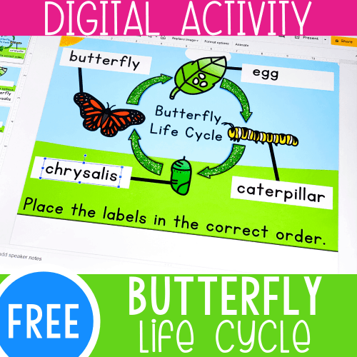 small resolution of Life Cycle of a Butterfly Activity for Kids -