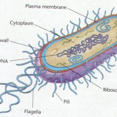 Basic Carbon Cycle Diagram Rheem Tankless Electric Water Heater Wiring Archaebacteria And Eubacteria - Life Processes