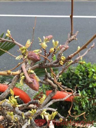盆栽の魅力を知る2