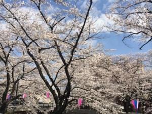 【2014年関東のお花見まとめ】今後のお花見で参考にしてね!